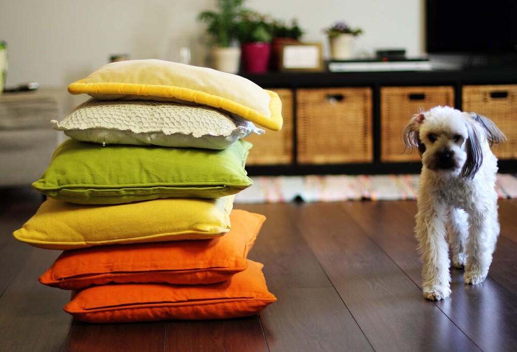 愛犬・愛猫と快適に暮らす家づくりのイメージ