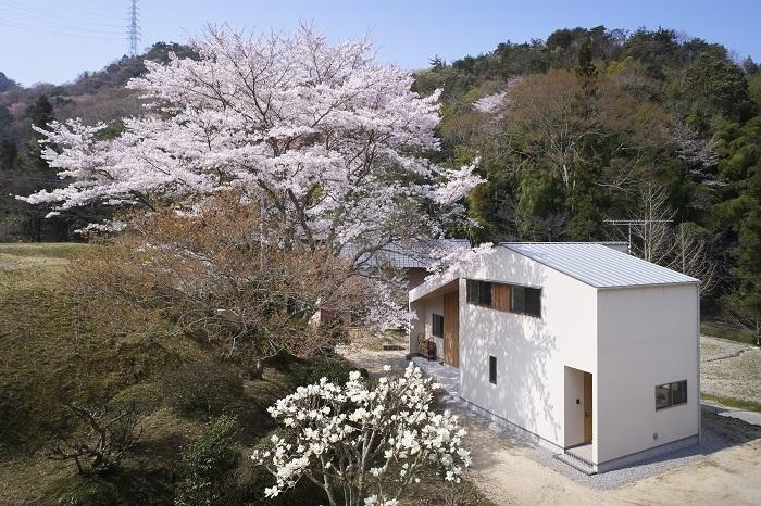 PROTO BANK 010 - 大きな桜の木下で…/SAKURA TIMES (設計: 織田博充) の外観写真