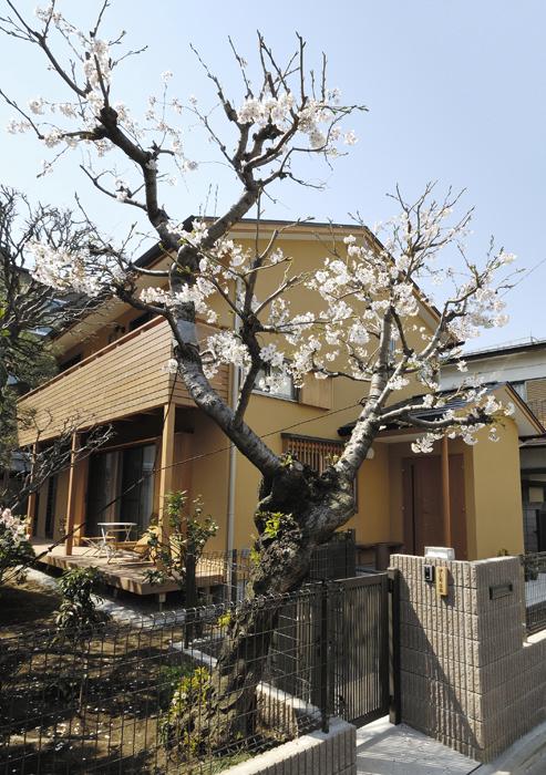 桜の家の写真