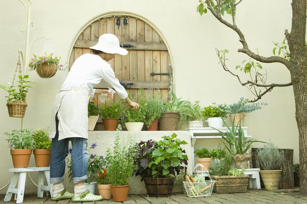 平屋を建てよう。庭と暮らそう。土と生きる幸せ。のイメージ